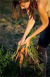 Young Woman In Garden Harvesting Carrots, Croatia, Slavonia, Europe