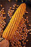 Corn Cob And Kernels, Croatia, Slavonia, Europe