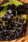 Fresh Grapes, Close-up, Croatia, Slavonia, Europe