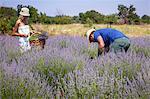 Young Couple in Lavender Field, Croatia, Dalmatia, Euopw