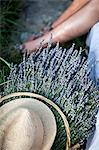 Lavender Bouquet In Basket, Croatia, Dalmatia, Europe