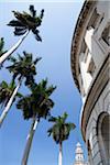 PALMS IN THE BLUE SKY AND BUILDINGS, GRAN TEATRO DE LA HABANA IN BACKGROUND, HAVANA, HAVANA PROVINCE, CUBA