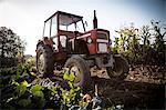 Tractor In Field, Croatia, Slavonia, Europe