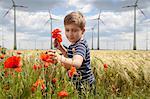 Boy On Field Plucking Poppy Flowers, Dessau, Germany, Europe