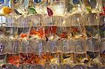 Tropical fish at pet shop, Mongkok, Hong Kong, China, Asia