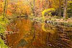 Autumn colours around the River Teign and Hannicombe Wood near to Fingle Bridge, Dartmoor National Park, Devon, England, United Kingdom, Europe