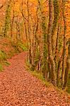 Hannicombe Wood near to Fingle Bridge, Dartmoor National Park, Devon, England, United Kingdom, Europe