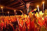 Farmer picking rhubarb in candlelit barn