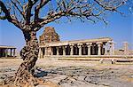 Asia, India, Karnataka, Hampi.  Ancient tree in the Vitthala temple complex.