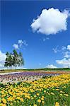 Flower garden and sky with clouds, Hokkaido
