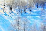 Snow at Lake Onogawa, Fukushima prefecture