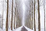 bicycle road between tree rows in winter