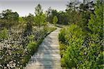 Boardwalk through Black Moor, UNESCO Biosphere Reserve, Rhon Mountains, Bavaria, Germany