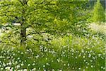 Black Moor, UNESCO Biosphere Reserve, Rhon Mountains, Bavaria, Germany