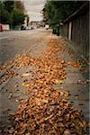 Sidewalk Covered with Autumn Leaves, Copenhagen, Denmark