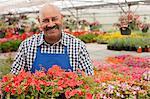 Mature gardener working in garden centre, smiling