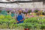 Mature gardener watering plants in garden centre, smiling