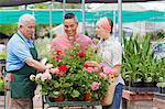 Senior gardener serving mature man and mid adult woman in garden centre