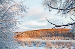 Wintry landscape scene