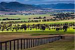 Stud farms near Denman, New South Wales, Australia