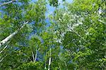 Trees and blue sky, Hokkaido