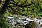 Mountain Stream, Fiordland National Park, Te Wahipounamu, Southland, South Island, New Zealand