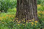 Black-eyed susan flowers surrounding tree trunk