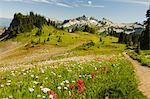 USA, Washington, Mt. Rainier National Park, alpine wildflowers