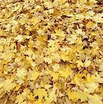 Autumnal leaves, full frame