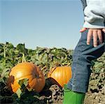 Girl (3-5) walking in pumpkin patch, low section, side view