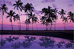 Palms at Sunset, Oahu, Hawaiian Islands
