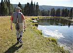 Senior man walking along riverbank with fishing equipment, rear view
