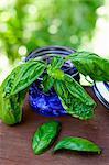 Fresh Basil Sprigs in a Blue Jar