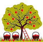 vector apple tree, ladder and baskets of apples, Adobe Illustrator 8 format