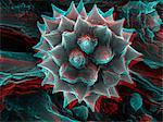 3D SEM image of chamomile pollen, 8 degree tilt