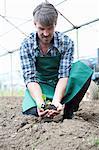 Organic farmer holding seedling in polytunnel