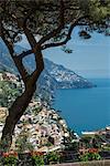Pine tree and houses on hillside, Positano, Amalfi Peninsula, Campania, Italy
