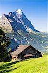 Old Barn on Alpine Meadow in front of Mount Eiger, Bernese Alps, Switzerland