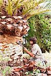 Man peeling palm tree with blade, Majorca, Spain