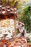 Man peeling palm tree with chainsaw, Majorca, Spain