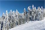 Snow Covered trees on Mount Ashland, Ashland, Southern Oregon, USA