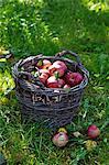 Red apples in a basket in a field