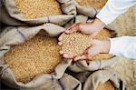 Man holding wheat grains from a sack in his cupped hands, Anaj Mandi, Sohna, Gurgaon, Haryana, India