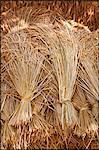 Rice sheaves,Loas