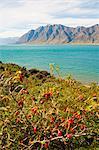 Lake Hawea, Southern Alps Mountain Range, West Coast, South Island, New Zealand, Pacific