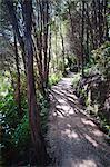 Forest path in the rainforest surrounding Pupu Springs (Te Waikoropupu Springs), Golden Bay, Tasman Region, South Island, New Zealand, Pacific