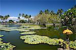 Lily pond, Candi Dasa, Bali, Indonesia, Southeast Asia, Asia