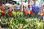 Flowers for sale in the Bloemenmarkt, the floating flower market, Amsterdam, Netherlands, Europe