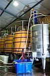 Autumn harvest, cellar operations, Remhoogte Winery Estate, Stellenbosch, Winelands, Western Cape, South Africa, Africa