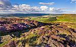 Busby Moor, North Yorkshire, Yorkshire, England, United Kingdom, Europe